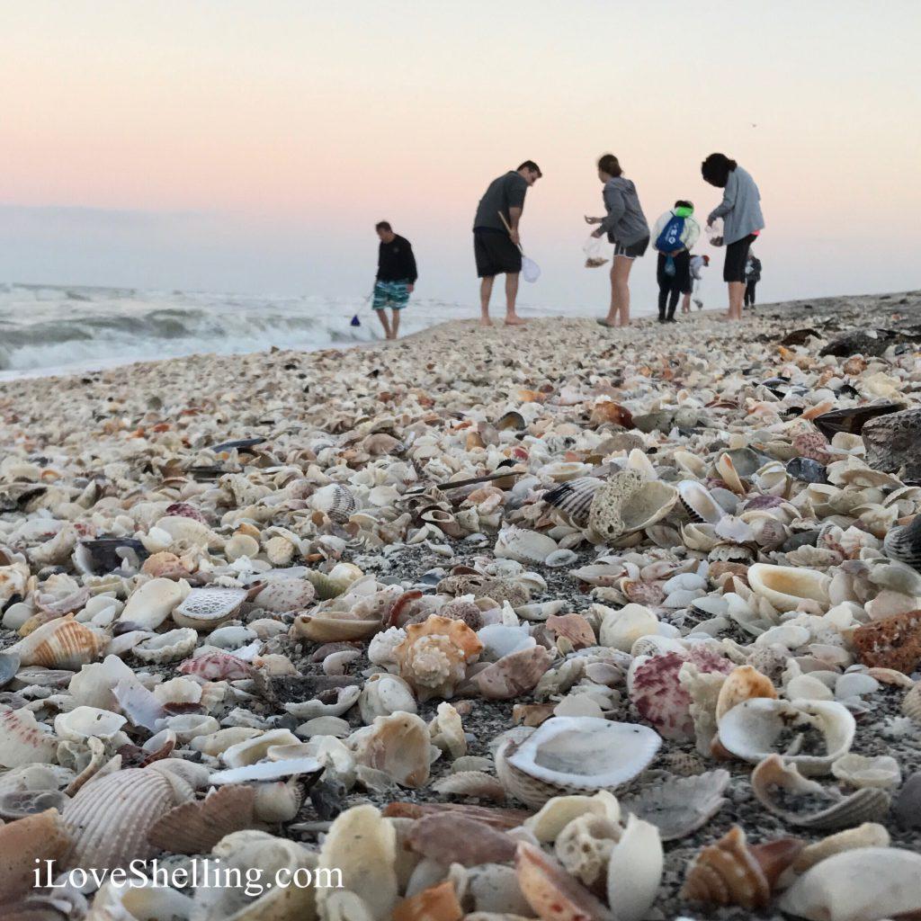 Captiva Island Florida's shell beach