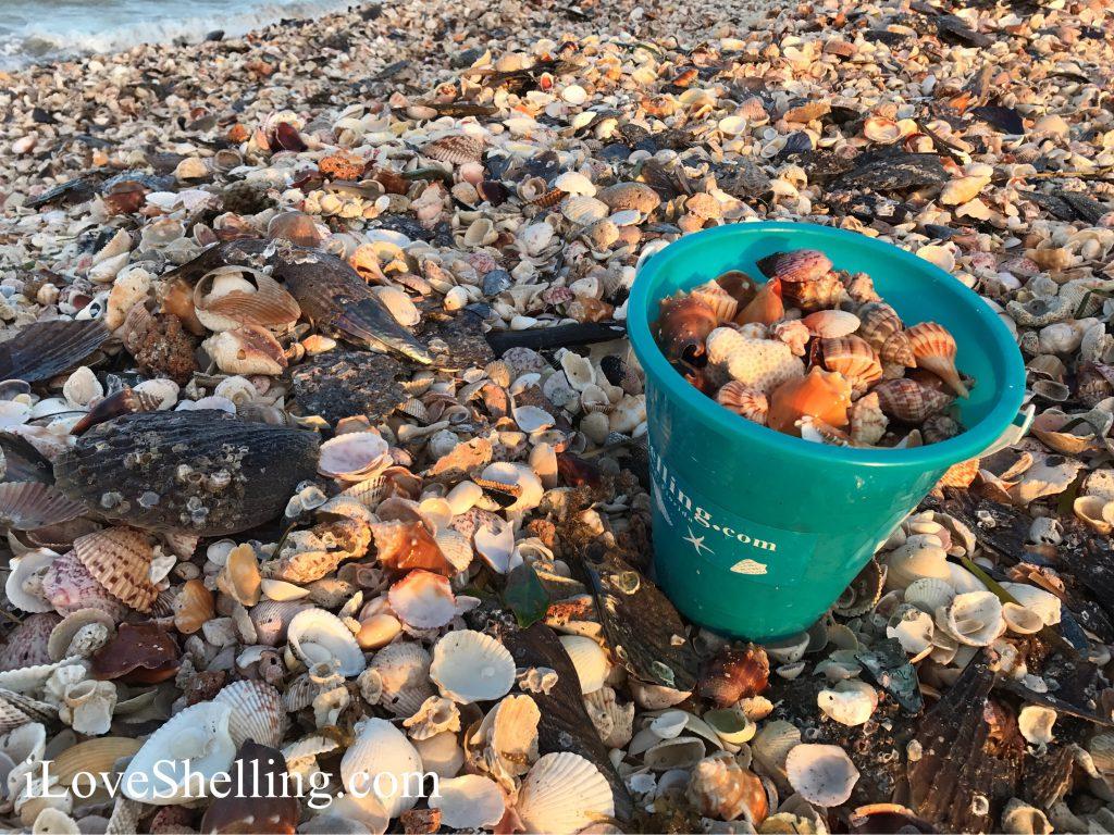 turquoise shell bucket on mound of shells turner beach