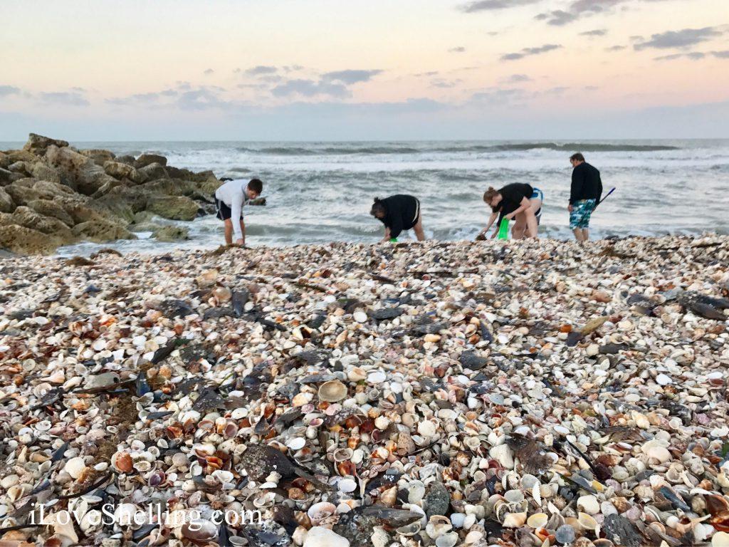 thousands of seashells at Turner Beach Captiva Florida