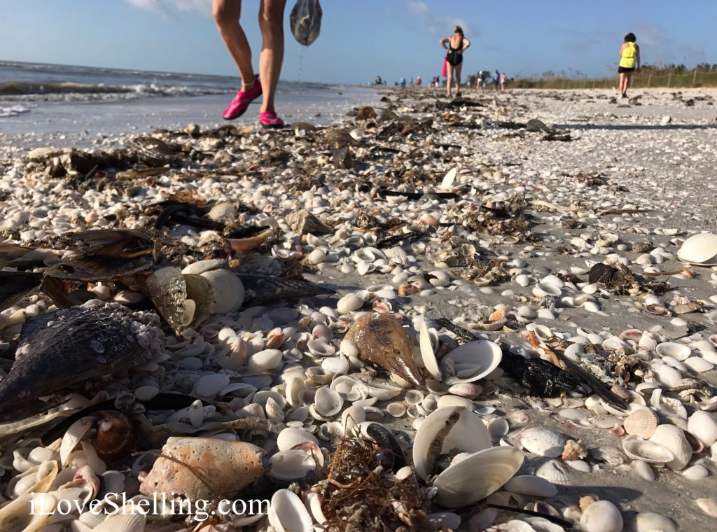 Sanibel beach best for shells