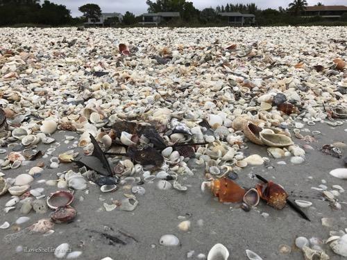 shells-at-gulfisde-city-park-beach-sanibel-