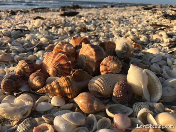 Beachcombing Blast On Cayo Costa