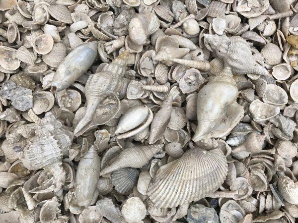 bag of fossil shells