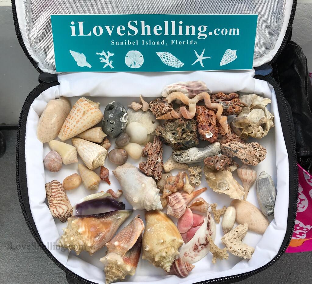 Shelling trip with Pam Rambo iLoveShelling 2
