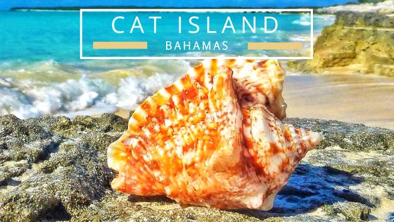 Cat Island Bahamas seashells beach comb