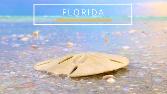 Florida Beachcombing Travel Destinations
