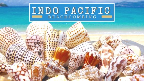 Indo Pacific Beachcombing