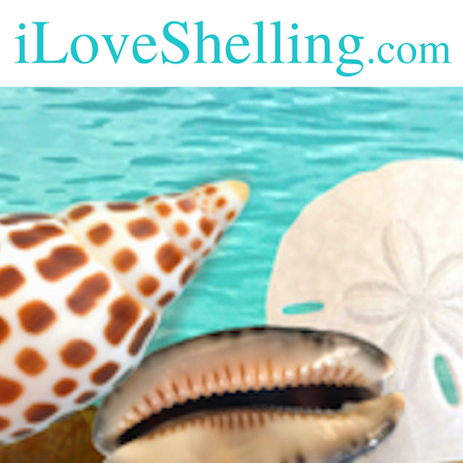 Shelling Tips   Where to Find Seashells   Collect Shells   I