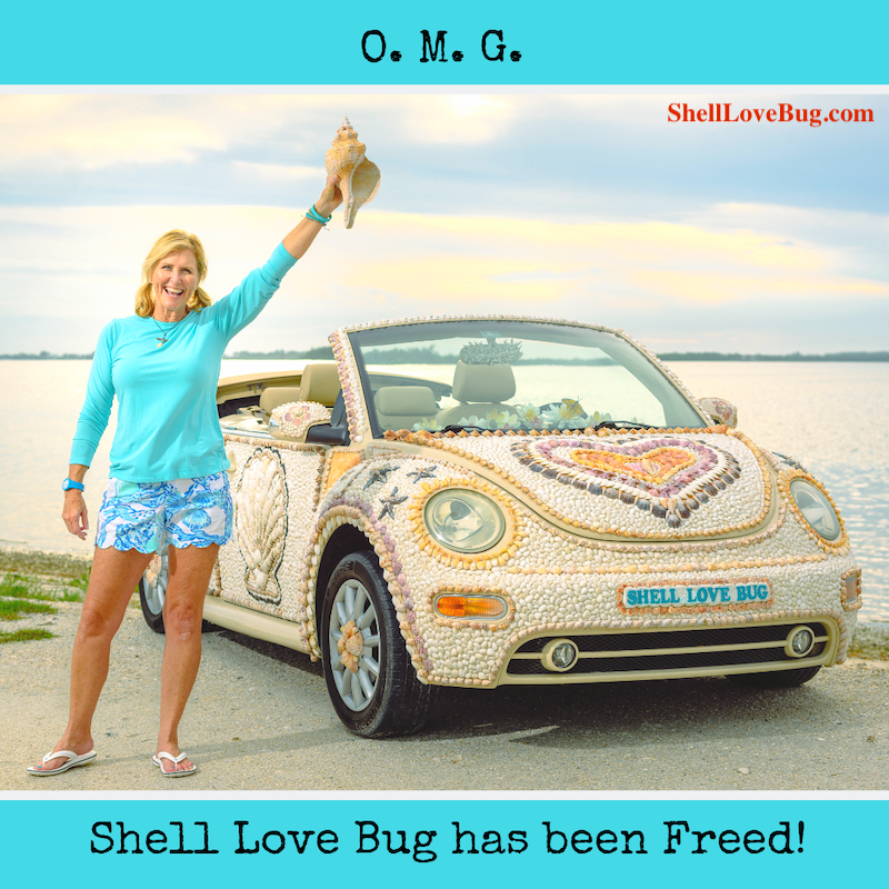 Happy Thanksgiving Yall Shell Bling >> Shell Love Bug Has Been Freed I Love Shelling